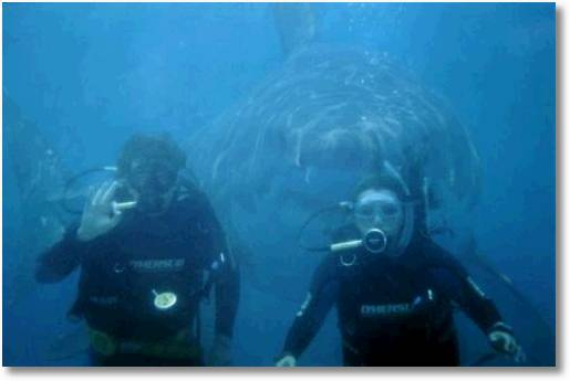 Is There A BIG Great White Shark Behind You?